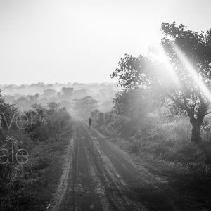 At Dawn in Monochrome